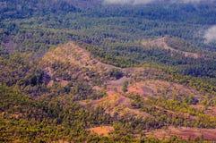 Сосновые леса, взгляд от вулкана Teide в Тенерифе, Испании стоковое изображение