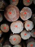 Сосновые древесины Tuchola Художнический взгляд в винтажных ярких цветах Стоковое Изображение RF
