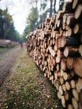 Сосновые древесины Tuchola Художнический взгляд в винтажных ярких цветах Стоковая Фотография