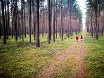 Сосновые древесины Tuchola Художнический взгляд в винтажных ярких цветах Стоковые Фотографии RF