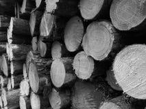 Сосновые древесины Tuchola Художнический взгляд в черно-белом Стоковые Фото