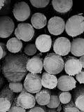 Сосновые древесины Tuchola Художнический взгляд в черно-белом Стоковые Изображения RF