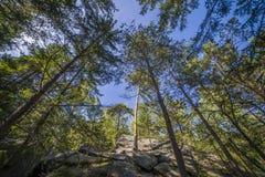 Сосновый лес ландшафта лета в Карпатах Стоковое Изображение RF