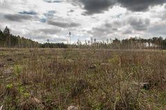 Сосновый лес будучи отрезанным вниз с поворачивать в сухое безжизненное поле Стоковое Изображение RF
