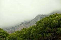 Сосновый лес в горной цепи на туманный день Стоковое Изображение