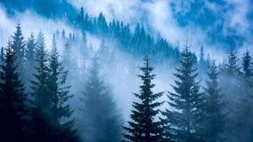 Сосновый лес в голубом тумане Стоковая Фотография