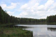 Сосновый лес и озеро Стоковое Изображение