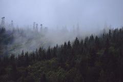 Сосновый лес на горе покрывает в тумане стоковая фотография
