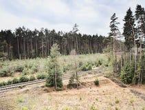 Сосновый лес 080 одноколейного пути ведущий загадочный в зоне kraj Machuv Стоковое Изображение