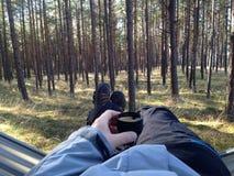 Сосновый лес стоковое фото rf