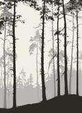 Сосновый лес иллюстрация штока