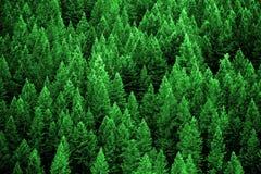 Сосновый лес в горах глуши стоковая фотография