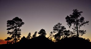 Сосновый лес на наступлении ночи, Gran canaria Стоковые Изображения RF