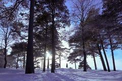 Сосновый лес на прибрежных дюнах Белое море Severodvinsk стоковая фотография
