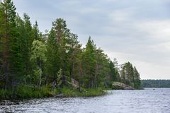 Сосновый лес на скалистом береге озера Стоковое Изображение