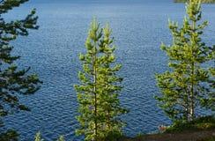 Сосновый лес на скалистом береге озера Стоковые Фотографии RF