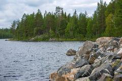 Сосновый лес на скалистом береге озера Стоковое фото RF