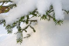Сосновый лес покрытый с снегом в холодной зиме Стоковая Фотография RF