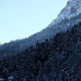 Сосновый лес Cliffside Snowy высокогорный стоковые изображения rf