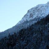 Сосновый лес Cliffside Snowy высокогорный стоковая фотография