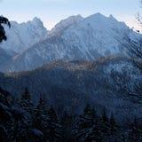 Сосновый лес Snowy гористый высокогорный стоковые изображения