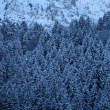 Сосновый лес Snowy гористый высокогорный стоковая фотография rf