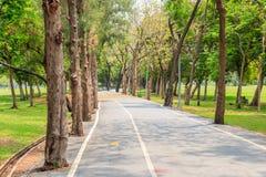 Сосны выровняли майну велосипеда в парке Стоковые Изображения RF