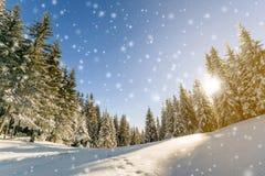 Сосны в горах и падая снег в зиме сказки Стоковые Изображения