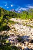 Сосны в горах Col de Bavella около городка Zonza, Корсики стоковые фотографии rf