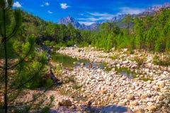 Сосны в горах Col de Bavella около Zonza, острова Корсики, Франции, Европы стоковое фото