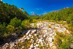 Сосны в горах Col de Bavella, острове Корсики, Франция, стоковые изображения