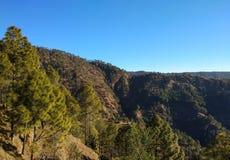 Сосны в лесах uttarakhand Стоковое Изображение
