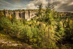 Сосны в пейзаже осени Стоковая Фотография