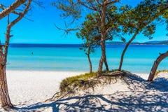 Сосны и бирюза мочат в пляже Pia Марии стоковое изображение