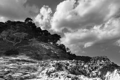 Сосны и утесы на домино Сан Острова Tremiti Apulia r стоковые фотографии rf