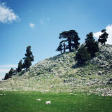 Сосны и утесы постаретое фото Долина горы около Tahtali Dagi, Турции Стоковые Изображения RF