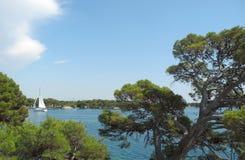 Сосны, море, парусник Стоковая Фотография