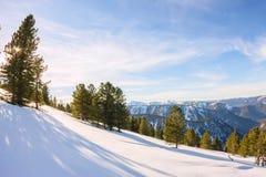 Сосны мягких древесин на горных склонах в снеге в свете Стоковое Изображение RF