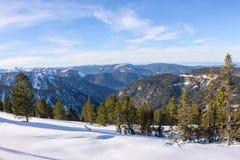 Сосны мягких древесин на горных склонах в снеге в свете Стоковые Изображения RF