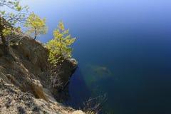 Сосны на банке пруда Стоковое Изображение