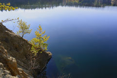 Сосны на банке пруда Стоковые Фотографии RF