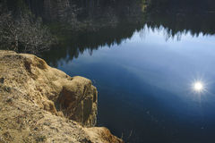 Сосны на банке пруда Стоковые Изображения RF