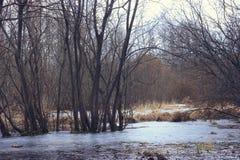 Сосны на береге замороженного захода солнца озера Стоковые Фото