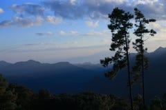 2 сосны на горах в утре, с солнцем Стоковые Фото