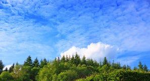 Сосны на горах предпосылки высоких Стоковое Фото