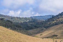 Сосны на горах стоковые изображения