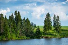 Сосны на зеленом побережье Стоковые Фото