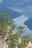 Сосны на ландшафте природы горы Стоковые Изображения