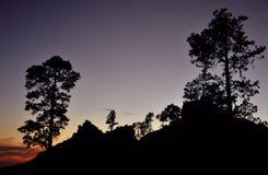 Сосны на наступлении ночи, Pilancones Стоковое Изображение RF