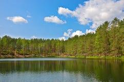 Сосны на озере Стоковая Фотография